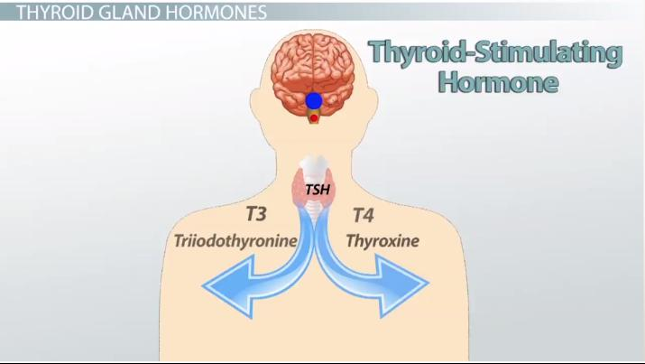 Approaches You must Utilize thyroid stimulating hormone to Produce